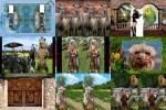 Lustige-Tiere.ppsx auf www.funpot.net