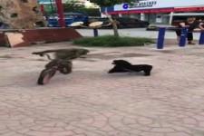 Der Hund jagt den Affen