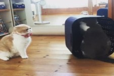 Katzen-Box-Box