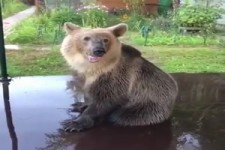 Dieser Bär hat Spaß