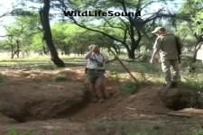 Vorsicht auf der Safari