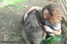 Mit Elefantenbabys kuscheln