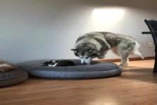 Respekt vor der Katze