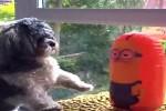 Spielzeuge-fuer-Tiere.mp4 auf www.funpot.net