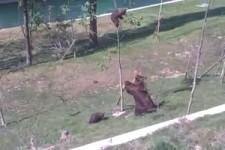 Mutter Bär