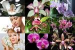 Orchids---Orchideen.ppsx auf www.funpot.net