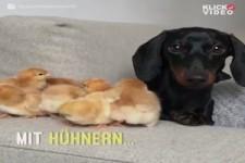 Süsseste Hund der Welt