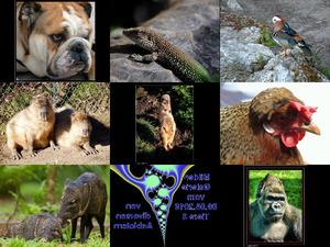 Bilder-Galerie vom 09082018 Tiere 3
