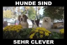 sehr clever