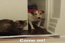 Hund vs Katz