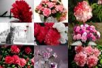 Carnations---Nelken.ppsx auf www.funpot.net