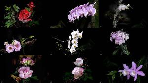 Yellowpink - Blumen