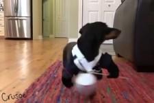 schlauer Hund