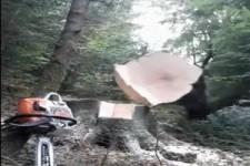 So fällt man einen Baum