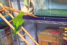 Schlauer Papagei