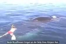 Wal gerettet