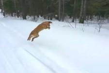 tierischer Spaß