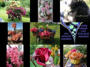 Bilder-Galerie vom 19092018 2 Blumen