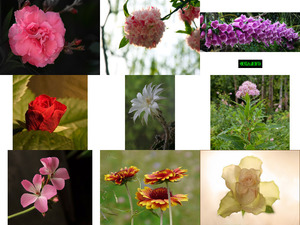 Art Photo - Flowers 5 - Kunstfoto - Blumen 5