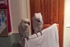 Vögel unter sich