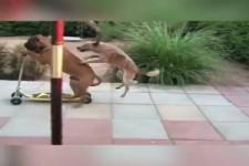 Hilfsbereite Hunde, sehr nett