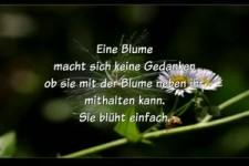 Eine Blume...