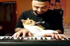 Katzen-Musik