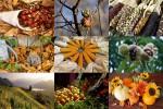 Wow-Beautyful-Herbst.pps auf www.funpot.net