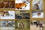 Der-Fuchs.ppsx auf www.funpot.net