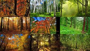 Wälder 9