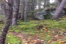 Der Wald atmet