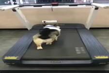 Sportief hondje - Sportlicher Hund