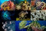 Unterwasserleben-2.ppsx auf www.funpot.net