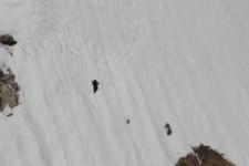 Bären im Schnee
