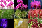 Orchideen.ppsx auf www.funpot.net