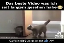 Bestes Video