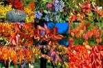 Autumn-Splendor---Herbstpracht.ppsx auf www.funpot.net