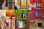 Autumn-Windows---Herbstfenster.ppsx auf www.funpot.net