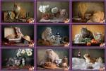 Chats-Photos-montages---Katzen-Fotomontagen.ppsx auf www.funpot.net