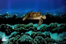Super Schildkröte