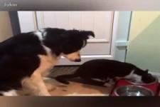 wie Hund und Katz !