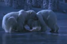 Eisbären-Tanz