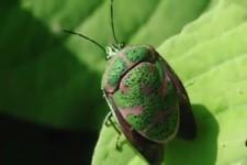 Besonderer Käfer