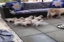 Die Kleinen bespaßen
