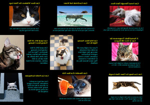 Amazing Facts About Cats - Erstaunliche Fakten über Katzen