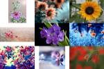 Des-Fleurs---Blumen.pps auf www.funpot.net