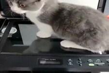 Katzenkopie