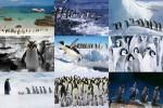 Pinguine-2.ppsx auf www.funpot.net