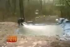 Ein Loch im Wald