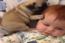 Herzige Szenen mit Hunden und Babys